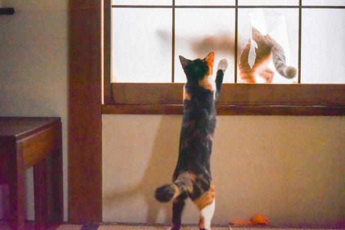 いたずらをする子猫の兄弟