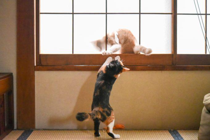 いたずらをする子猫の兄弟2