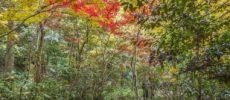 紅葉が美しい、自然あふれる等々力渓谷