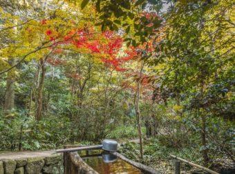 まるで深い森の中に迷い込んだよう。「等々力渓谷」の紅葉に包まれる週末散歩プラン
