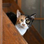 猫が教えてくれること「空っぽ」/画家&絵本作家・松田...