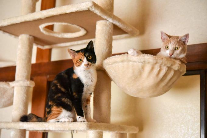 絵本作家の松田奈那子さんが飼っている子猫の兄妹