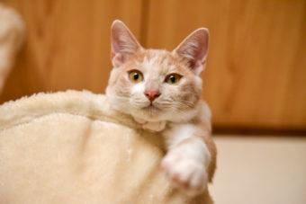 猫が教えてくれること「溢れ出る」/画家&絵本作家・松田奈那子さんの場合vol.2