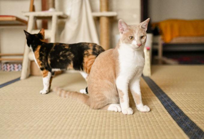絵本作家の松田奈那子さんが飼っている子猫兄妹2