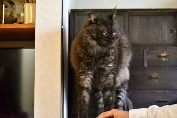 イラストレーター山中正大さんが飼っている猫のウキ2