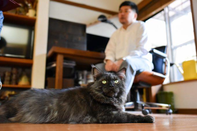 イラストレーター山中正大さんと飼い猫のウキ