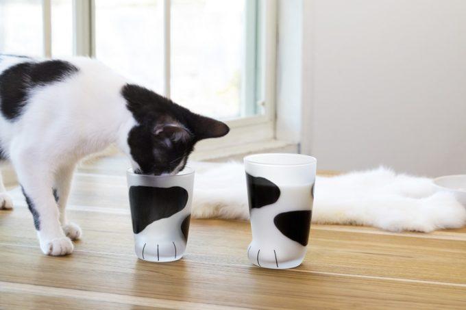 猫好きにおすすめの猫の足の形をしたコップと黒ブチの猫