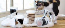 猫好きにおすすめの猫の足の形をしたコップ