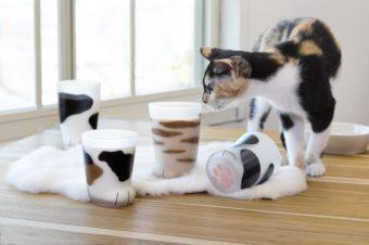 ふにゃんと気持ちがゆるむ。猫の魅力をたっぷり味わえるグラス「coconeco」
