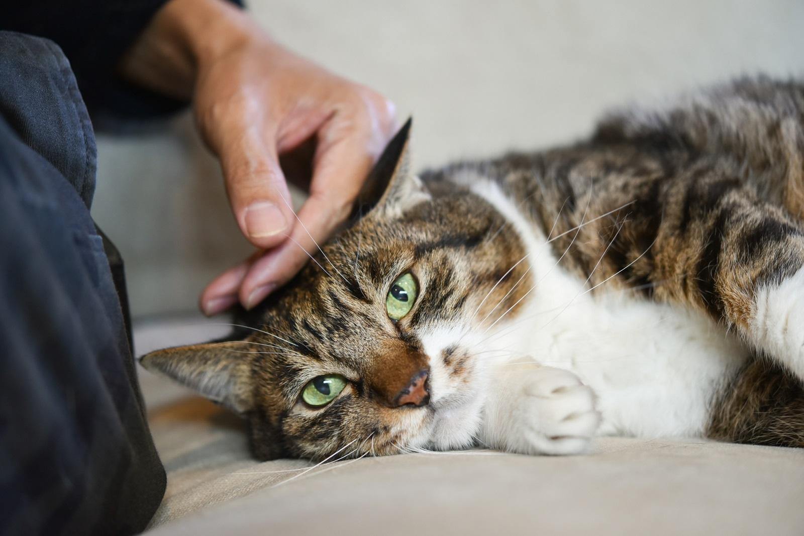 デザイナー&編集者・籾山ご夫妻の愛猫「トラ」