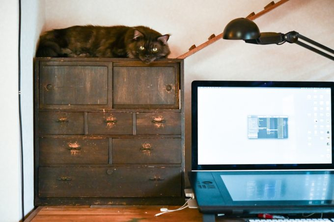 棚の上からこちらを見るイラストレーター山中正大さんが飼っている黒猫
