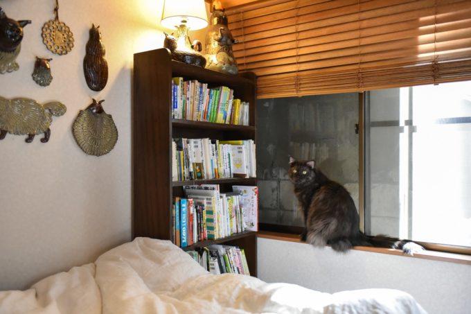 窓際にたたずむイラストレーター山中正大さんが飼っている黒猫