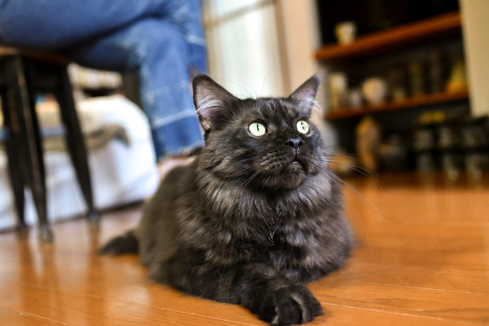 イラストレーター山中正大さんが飼っている猫のウキウキ