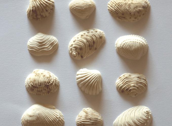 年末年始のお土産におすすめの「かしこ」の貝の形の干菓子