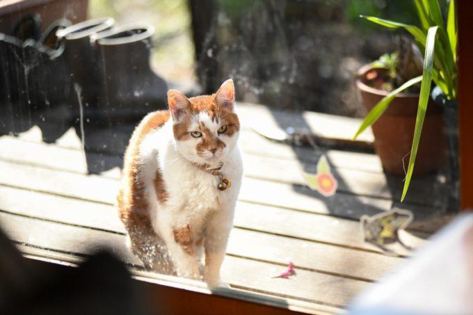 版画・猫野ぺすかさんの愛猫2
