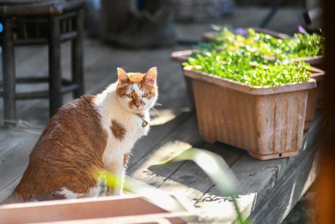 版画家・猫野ぺすかさんの愛猫4