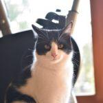 猫が教えてくれること「ご機嫌の威力」/版画家・猫野ぺすかさんの場合vol.1