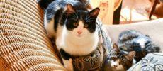 版画家・猫野ぺすかさんの愛猫1