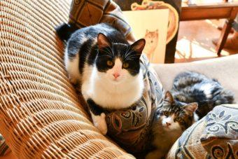 猫が教えてくれること「命のやわらかさ温かさ」/版画家・猫野ぺすかさんの場合vol.3