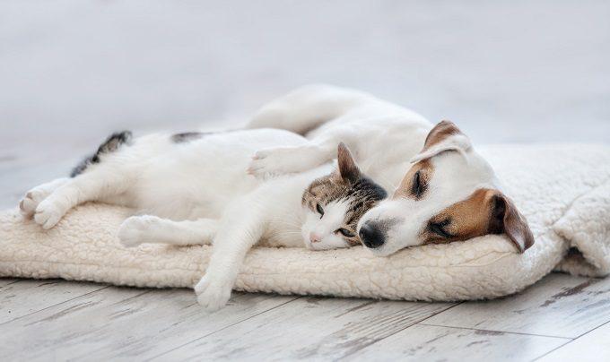 寝そべる犬と猫