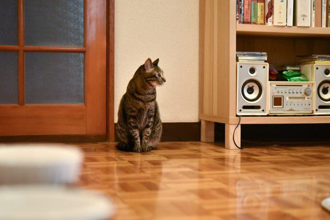 絵本作家・PEIACO(ぺいあこ)の愛猫3