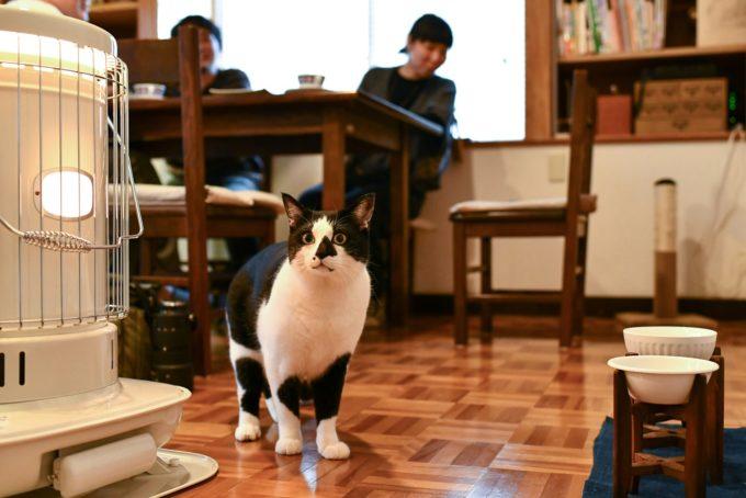 絵本作家・PEIACO(ぺいあこ)の愛猫4