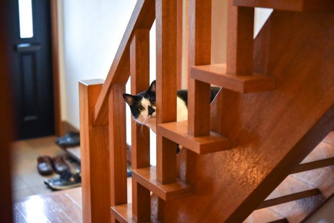 絵本作家・PEIACO(ぺいあこ)の愛猫が階段からのぞく様子