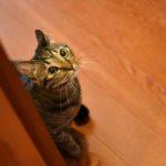 猫が教えてくれること「個性の内の世界」/絵本作家・PEI...