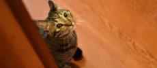 絵本作家・PEIACO(ぺいあこ)の愛猫1
