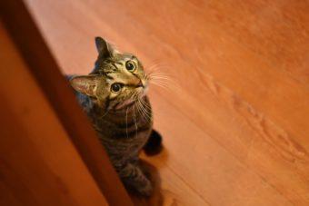 猫が教えてくれること「個性の内の世界」/絵本作家・PEIACO(ぺいあこ)の場合vol.2