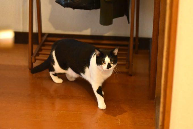 絵本作家・PEIACO(ぺいあこ)の愛猫2