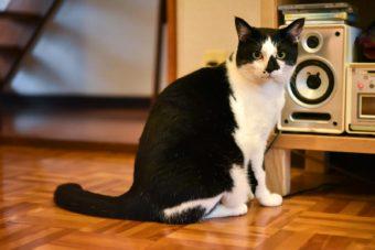 猫が教えてくれること「感覚で生きる」/絵本作家・PEIACO(ぺいあこ)の場合vol.1