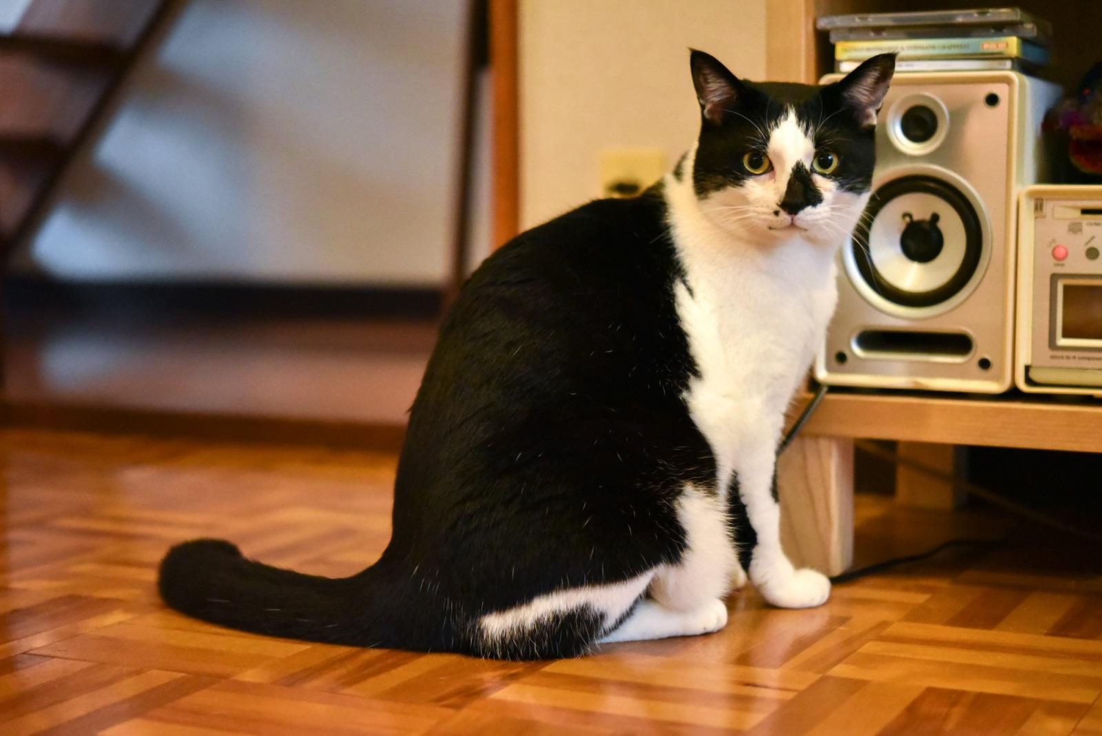 絵本作家・PEIACO(ぺいあこ)の愛猫
