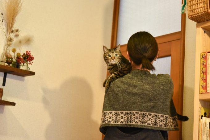 絵本作家・PEIACO(ぺいあこ)に抱かれる愛猫