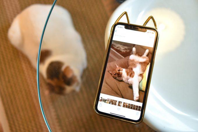 スマートフォンの画面に映ったデザイナー・山岸彩さんの愛猫