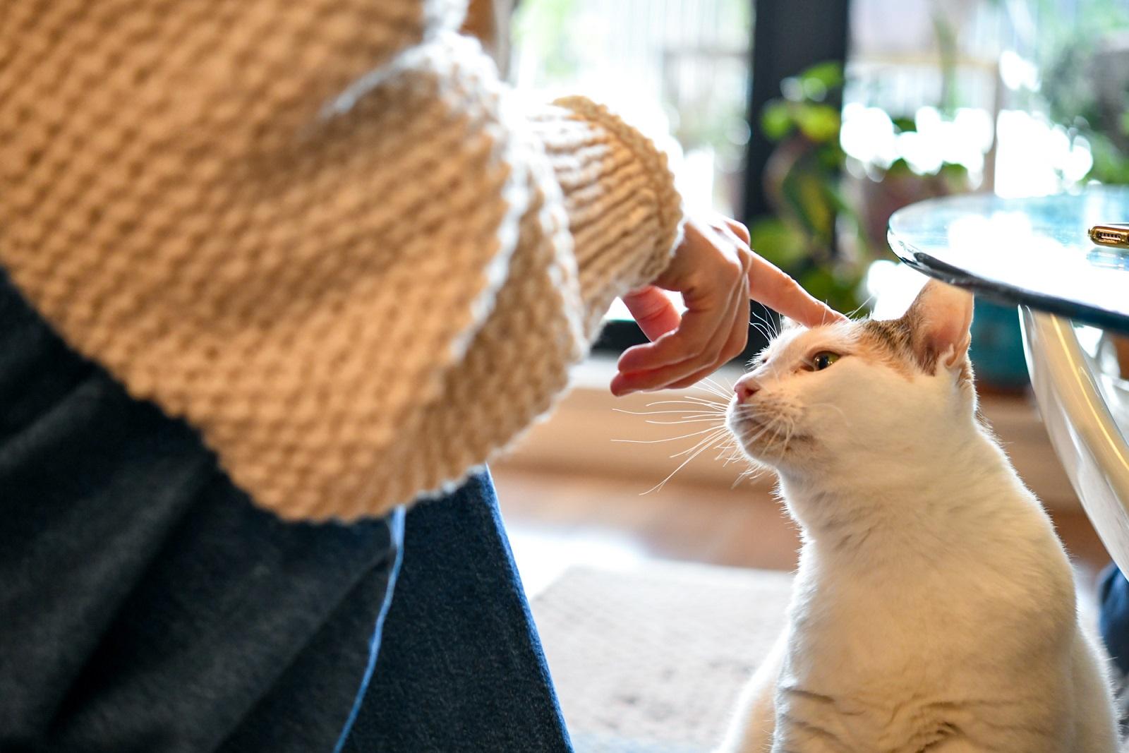 デザイナー・山岸彩さんの愛猫