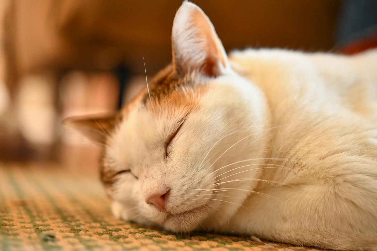 デザイナー・山岸彩さんの愛猫1