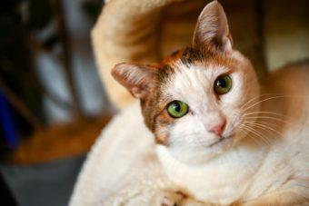 猫が教えてくれること「自分の軸で生きる」/デザイナー・山岸彩さんの場合vol.2