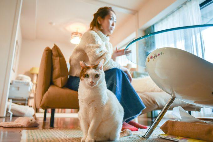 デザイナー・山岸彩さんと愛猫1