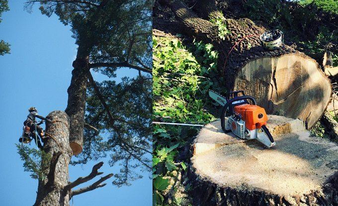 樹木伐採の様子