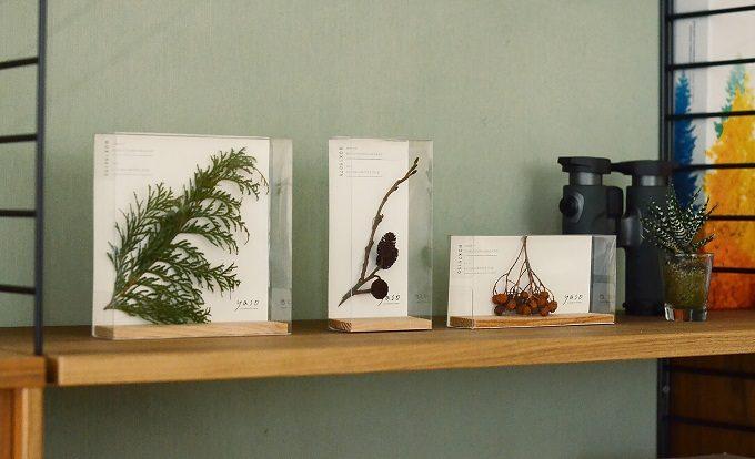 「yaso(ヤソ)」の植物標本