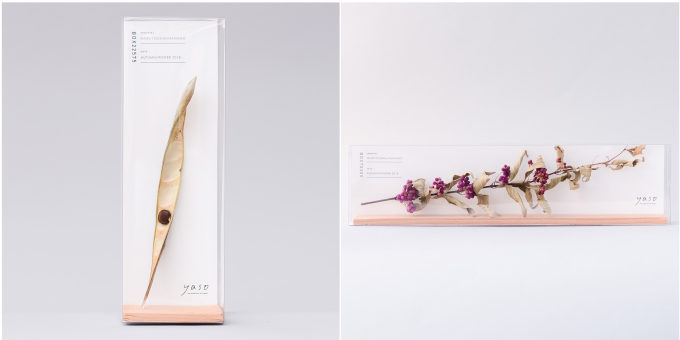 「yaso(ヤソ)」の植物標本「フジ」の実、「コムラサキ」