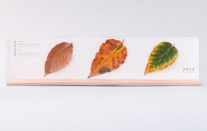 「yaso(ヤソ)」の植物標本「山のカケラ」2