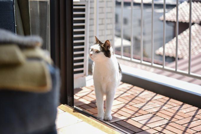 グラフィックデザイナー・島喜実子さんの愛猫4