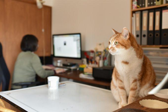 グラフィックデザイナー・島喜実子さんの愛猫6