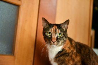 猫が教えてくれること「家族」/編集ディレクター・野辺真葵さんの場合vol.2