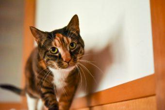 猫が教えてくれること「生かされ合って生きる」/編集ディレクター・野辺真葵さんの場合vol.3