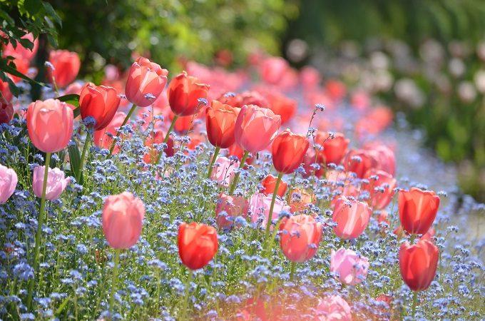 北川村『モネの庭』マルモッタンの季節の花1