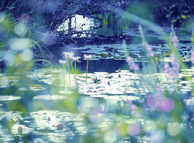 北川村『モネの庭』マルモッタンの「水の庭」のスイレン