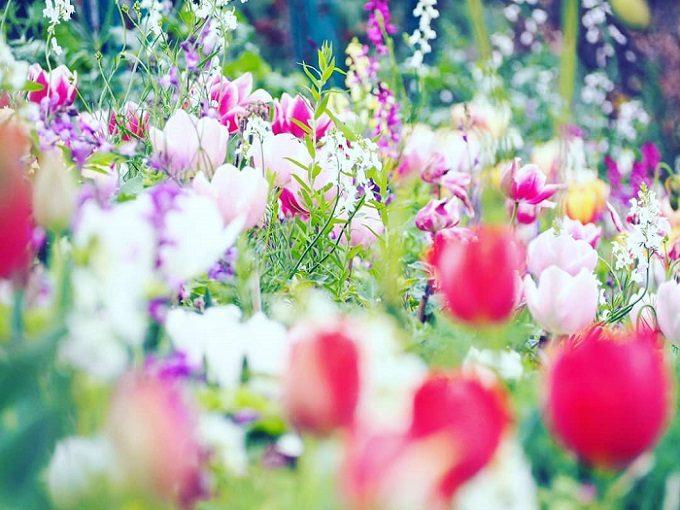 北川村『モネの庭』マルモッタンの季節の花2